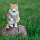 9 мгновений из жизни монастырского кота.
