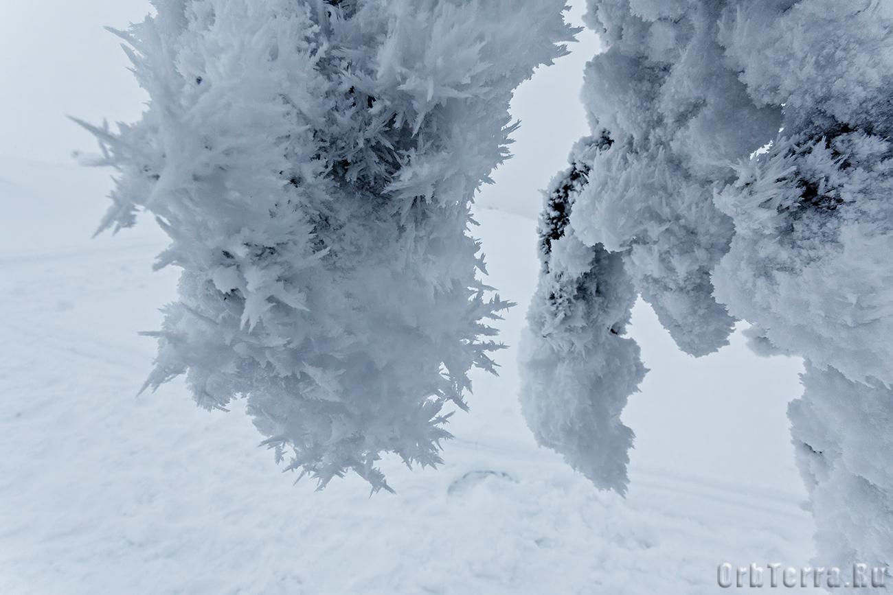 Снежные колючки.
