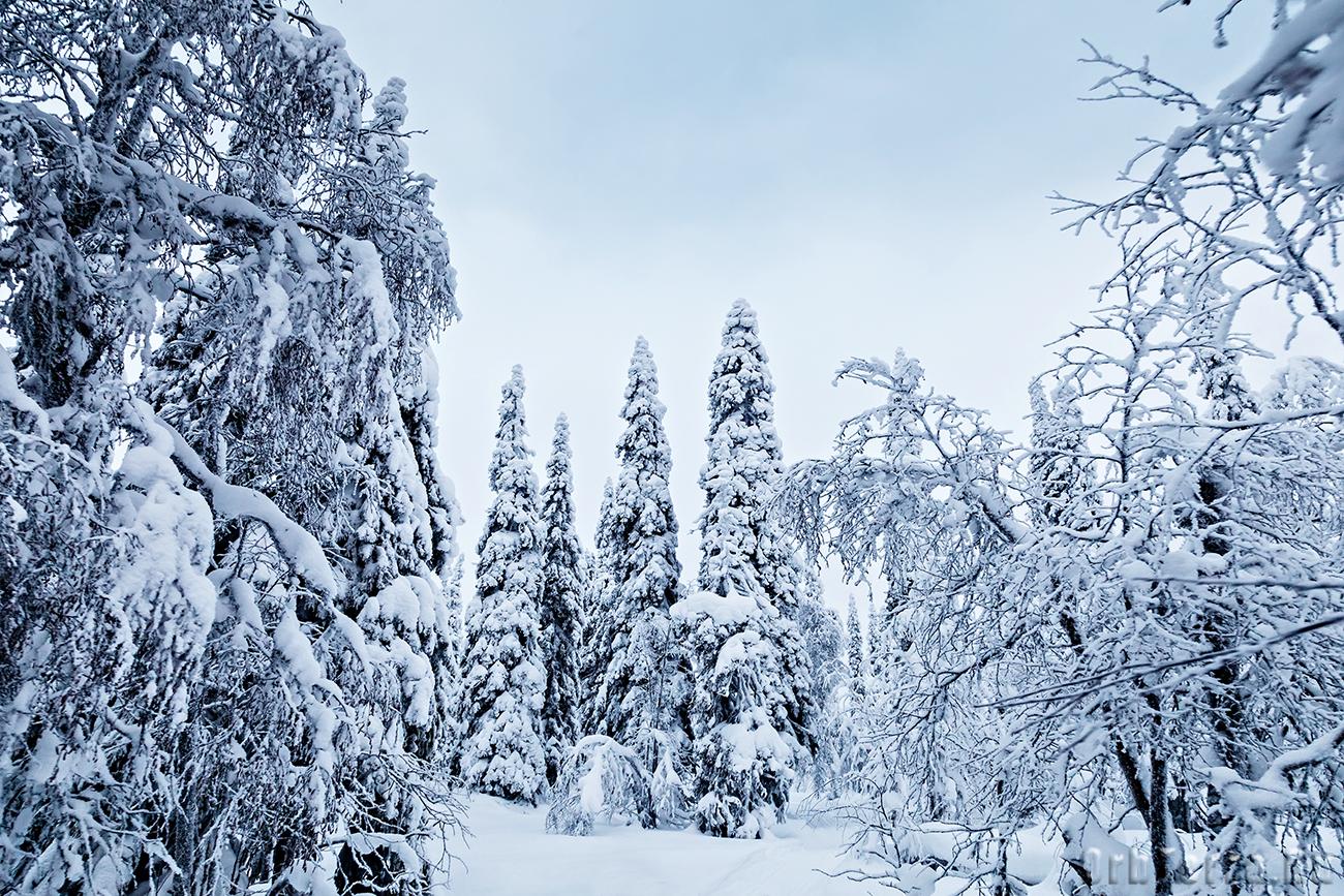 Зимний Паанаярви.