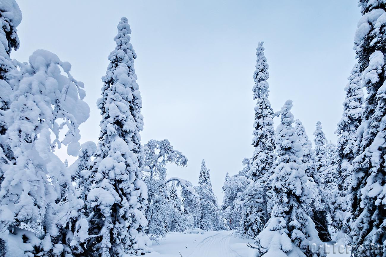 Лыжно-снегоходный путь.