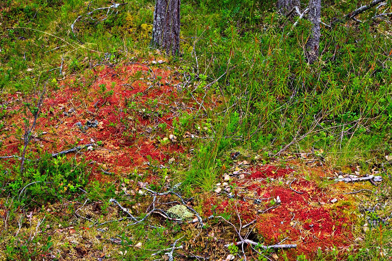 Интересная красная растительность.