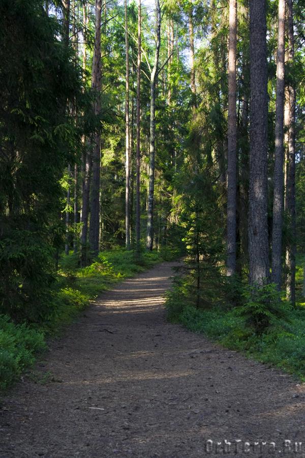 Лесные дорожки.