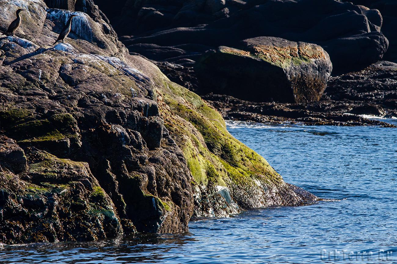 Пустые тюленьи лежбища.