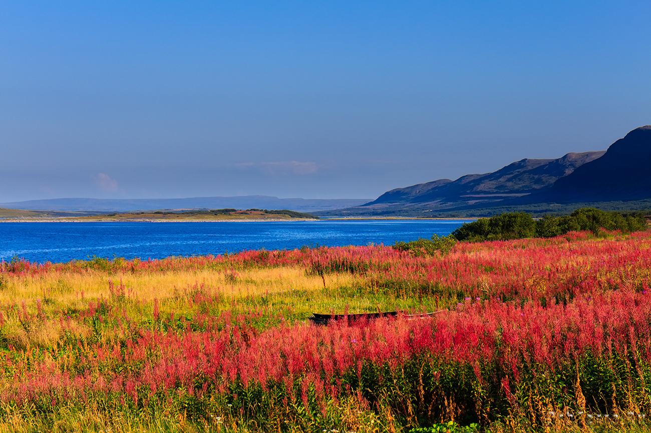 Пейзаж с Иван-чаем.